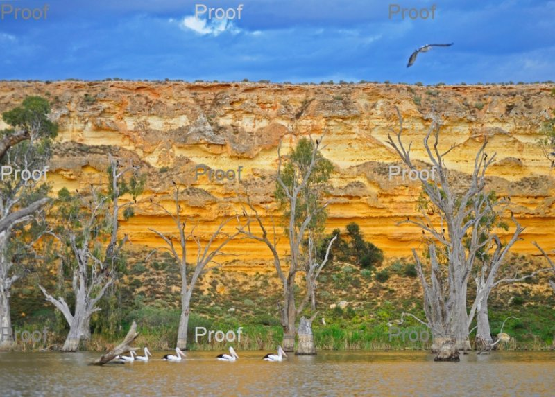 Blanchetown Limestone Cliffs, The Riverland, wetlands, South Australia