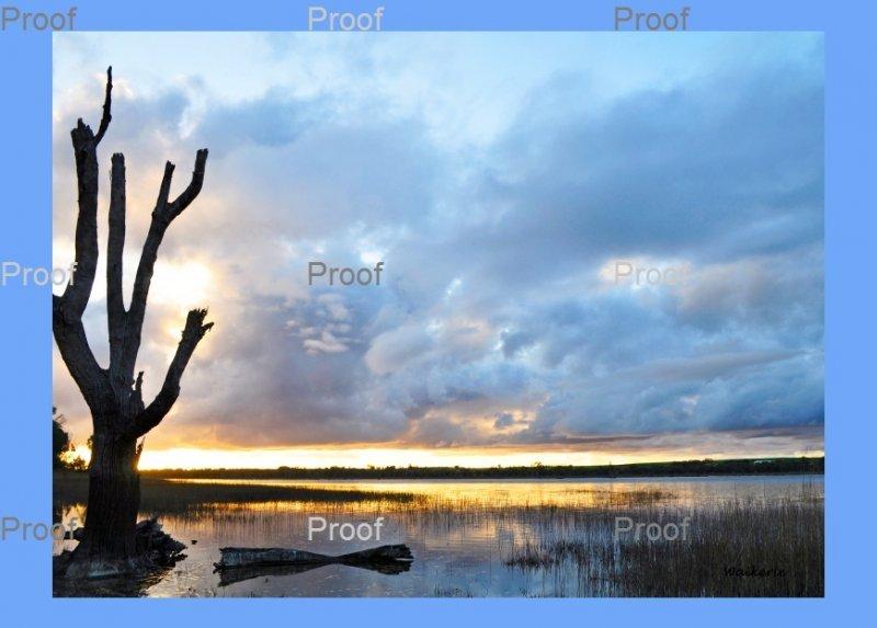 Hart lagoon Waikerie Wetlands. Riverland South Australia