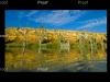 Blanchetown,limestone cliff, wetlands, River Murray, The Riverland South Australia