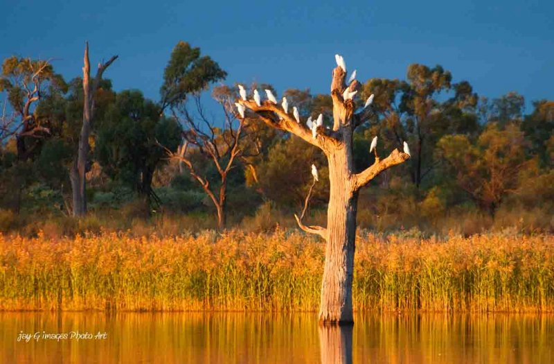 Waikerie Bird watching Hart lagoon