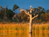 Waikerie Bird watching Hart lagoon
