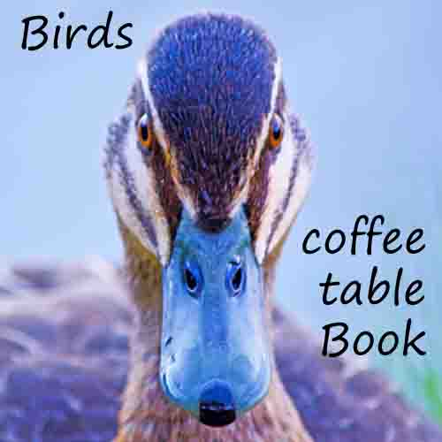 link to coffee table book Birds of the River Murray & wetland areas of South Australia