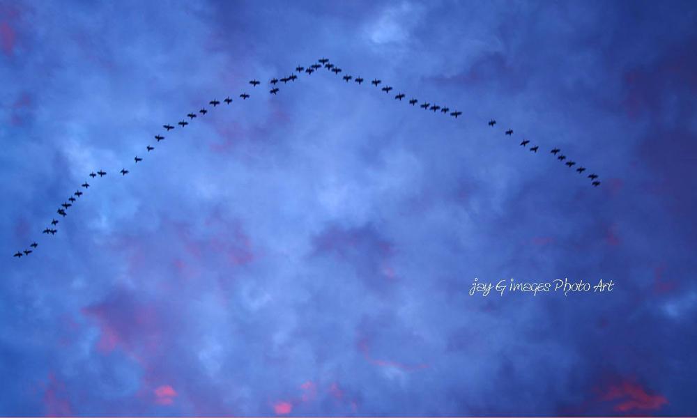 Formation Flying at Dusk