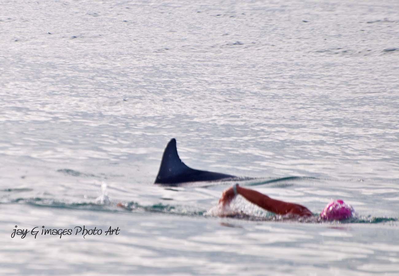 Dolphin & Swimmer