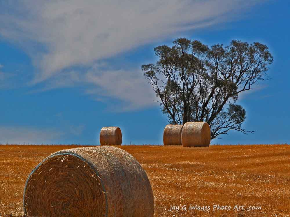 bales near the Barossa Valley